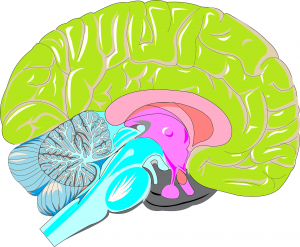 brain-2235831_1920