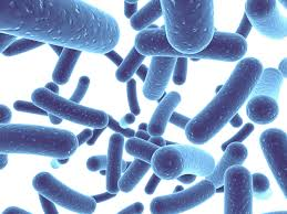 Probiotics: Bugs for better well-being