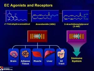ec agonists and receptors