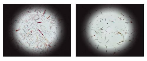 cecal-bacteria-communities