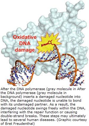 oxidative-dna-damage