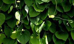 leaves-1909155_1920