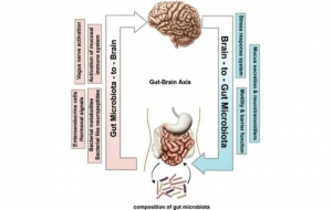 restoring-balance-and-harmony-to-gut-microbiome