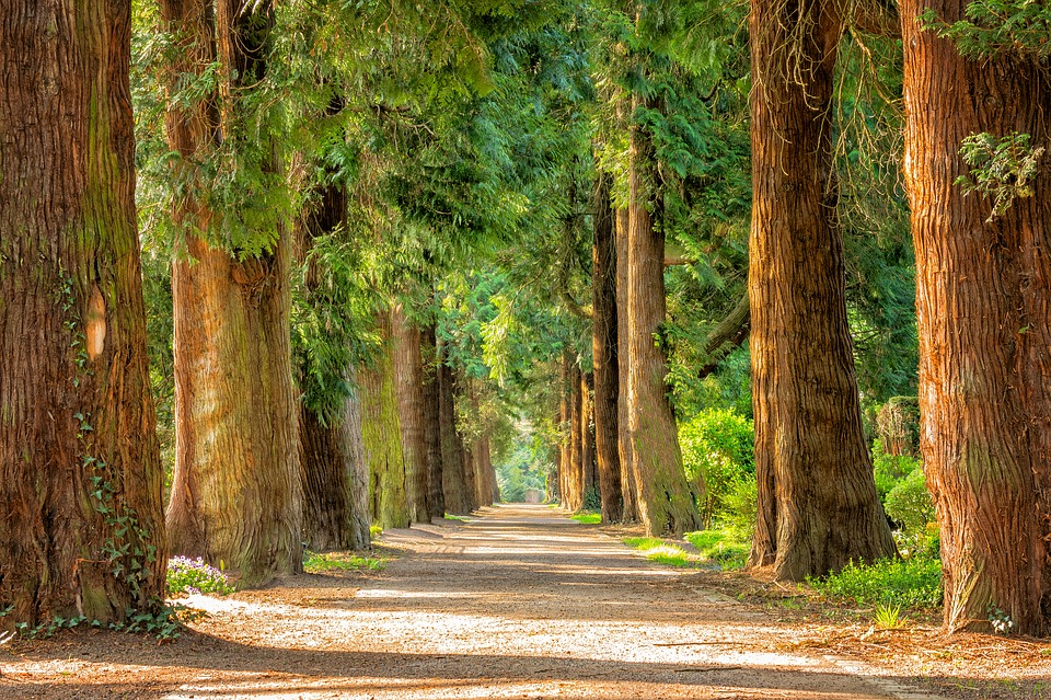 Path through a forest