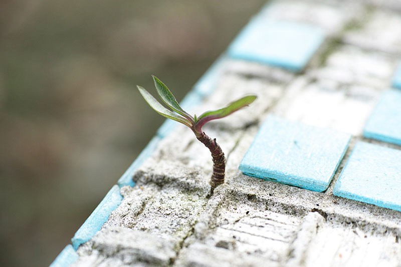 A single plant sprouting out of concrete