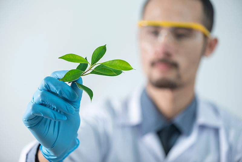 A lab scientist holding a plant