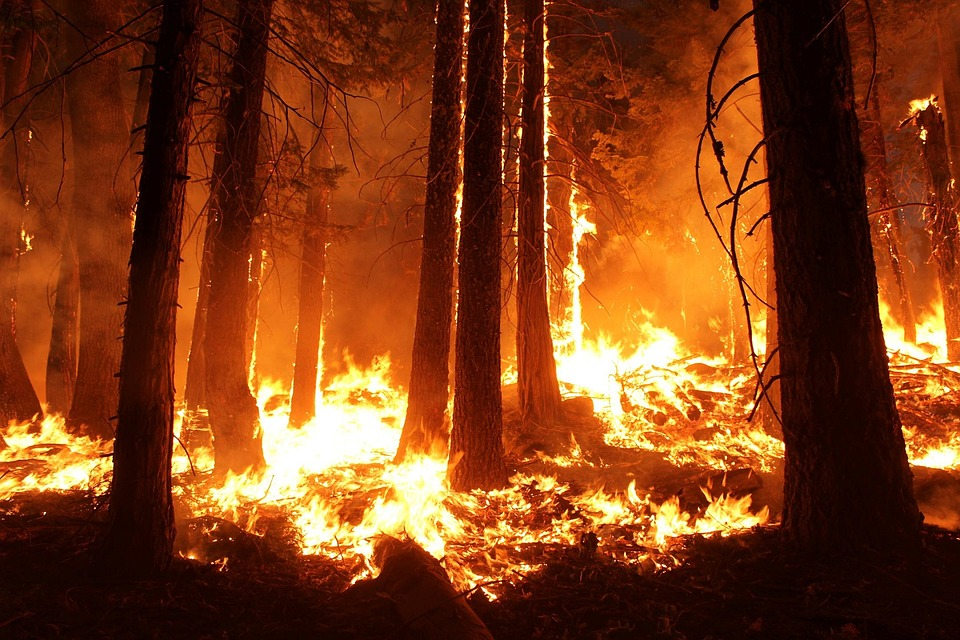 Holistic, compassionate, integrative response to recent wildfires