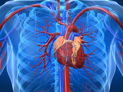 cardiometabolic.jpg.small.400x400.jpeg