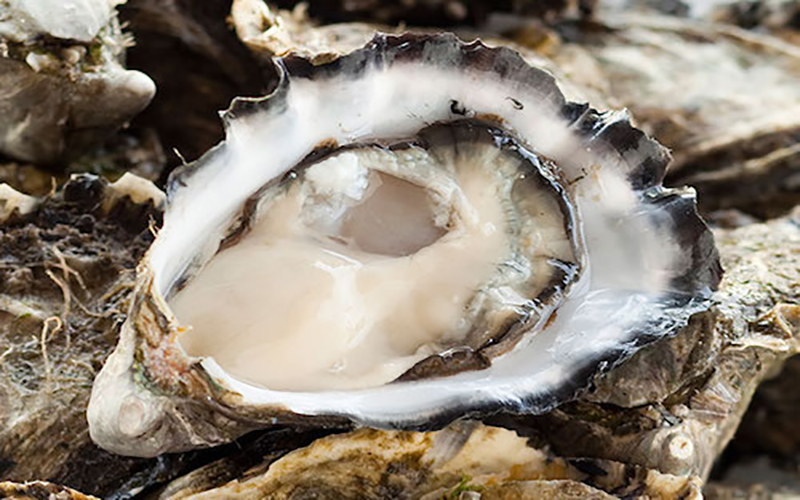 Deadly oyster virus detected in South Australia waters