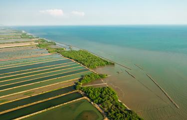 Shrimp farm destruction