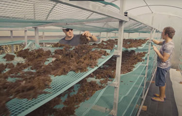 Friend of the Sea certifies Azores-based seaweed producer seaExpert