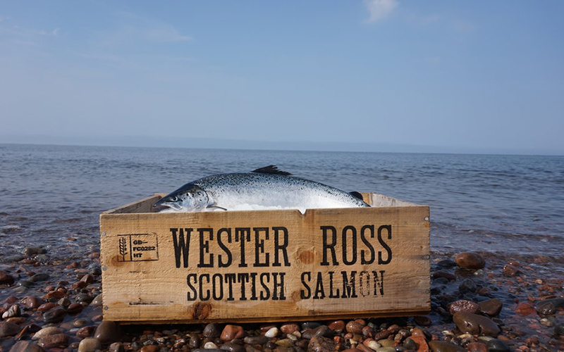Scottish salmon sector lauds natural sea lice solution