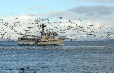 Alaskan fishermen could benefit from diversification