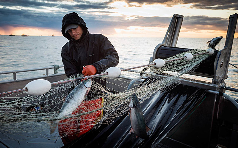 "Bristol Bay salmon run forecast to come off ""sugar-high"" in 2019"