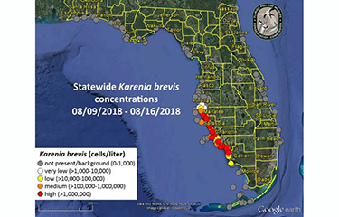 Florida Fish Tourism Losses Grow From Red Tide