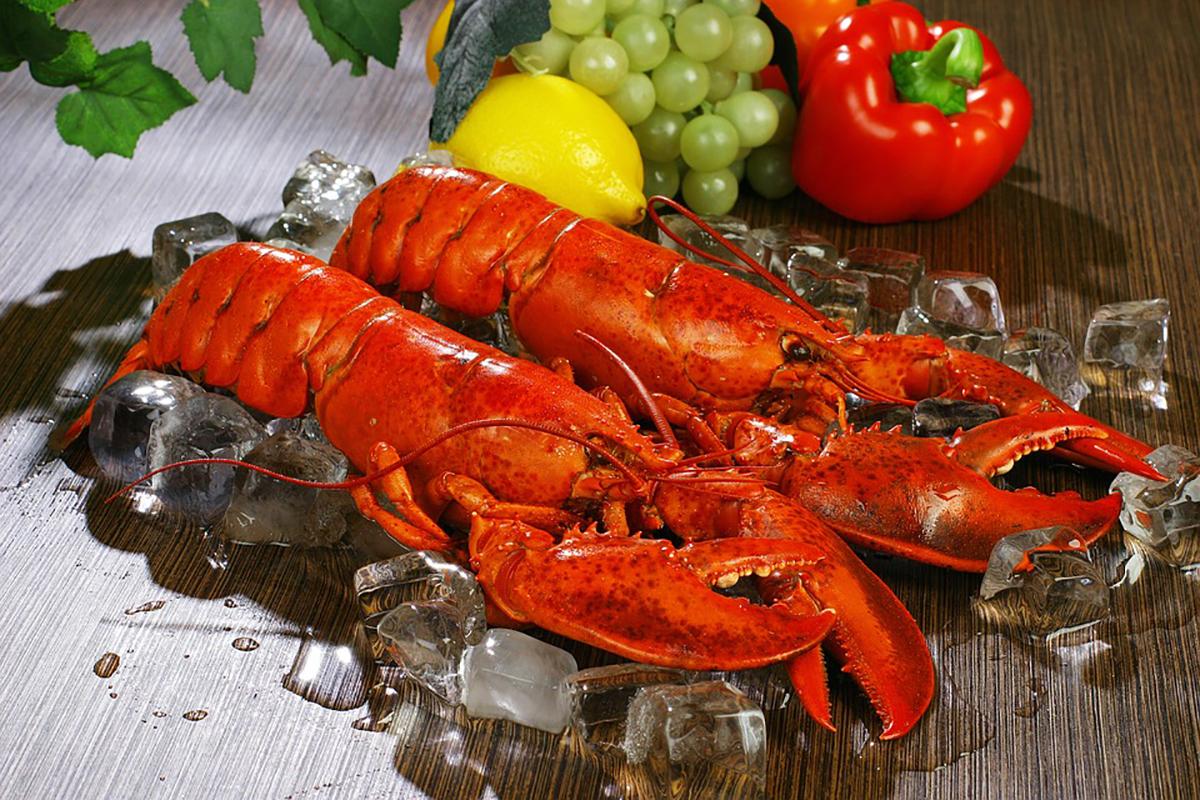 Valuable US lobster population goes under evaluation