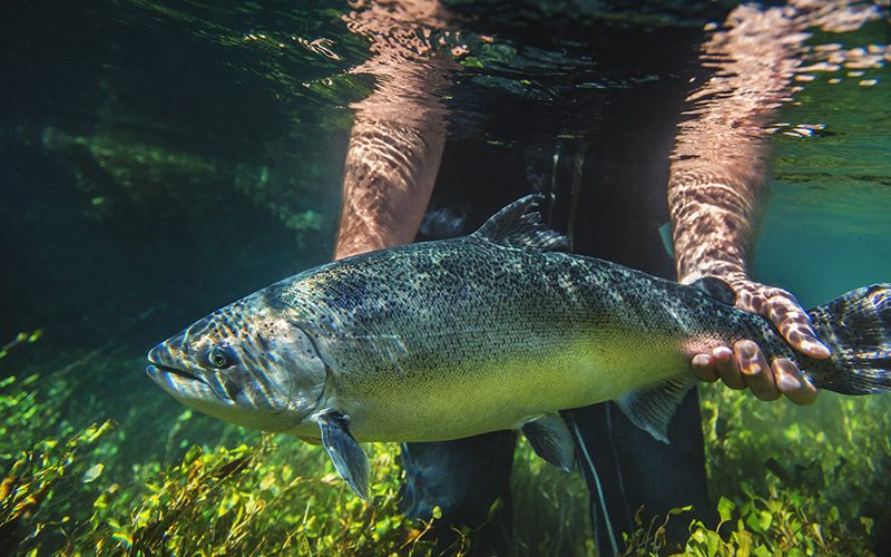 Fish first and foremost for New Zealand King Salmon's Grant Rosewarne