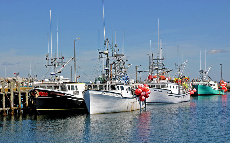 Taking inventory of Nova Scotia's lobster season