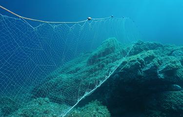 A driftnet underwater
